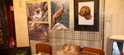 View the Album: Mostra animali  53 images